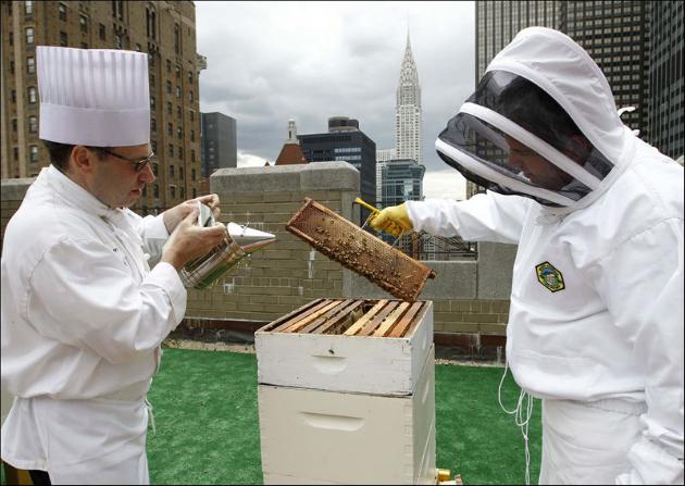 abejas waldorf