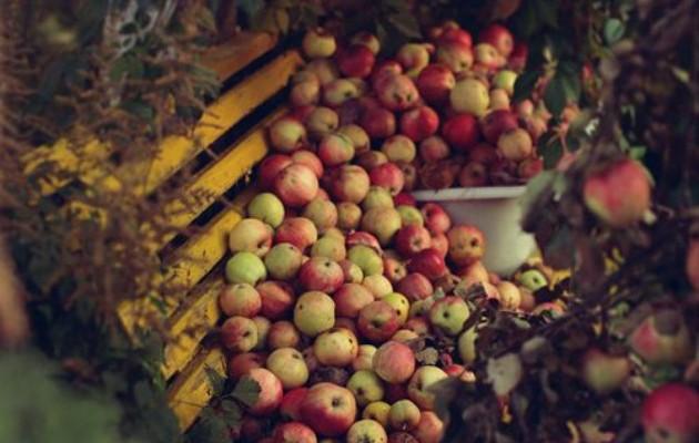 manzanas banco pp