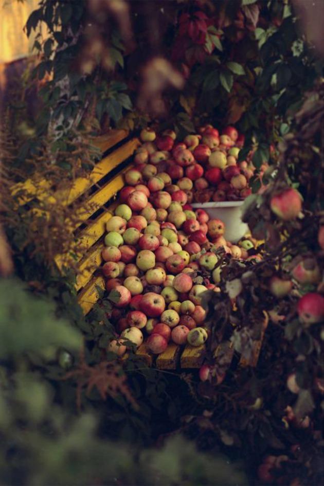 manzanas banco